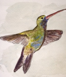 Hummingbird reduced