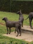 Prehistoric dogs