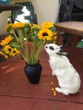 rabbit-with-sunflowers
